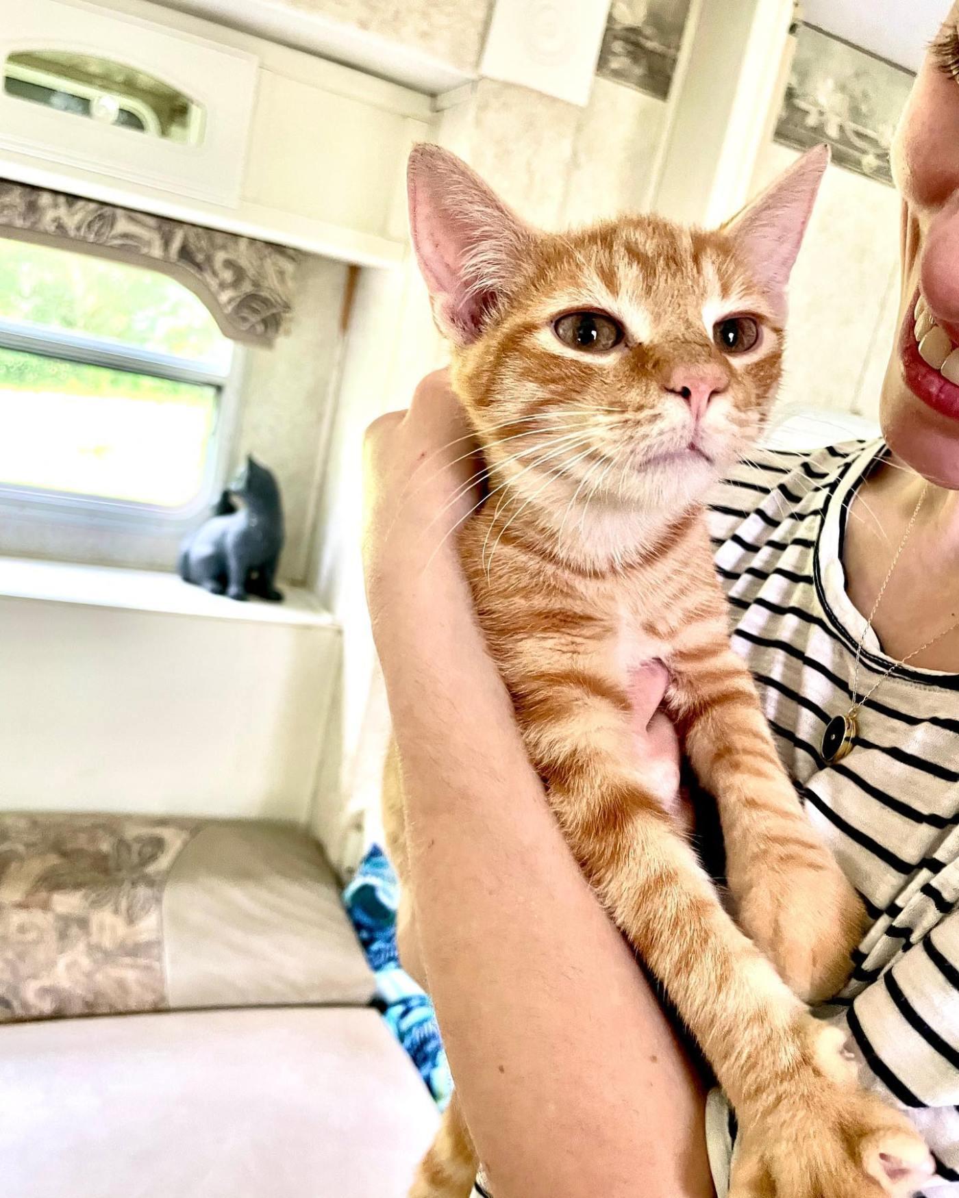 Kitty Kat Haven & Rescue