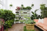 3 Botanica Plant Bar events you don't want to miss in October