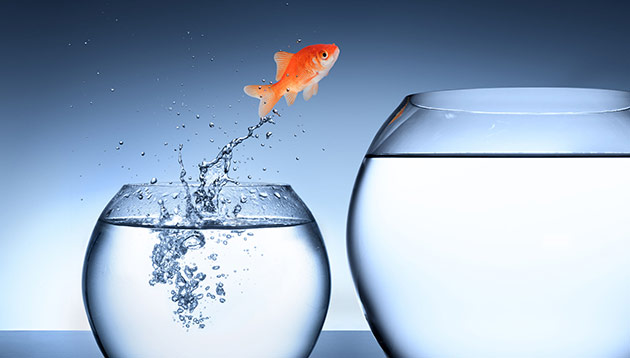 Wani-Job-moves-fish-bowl-123rf