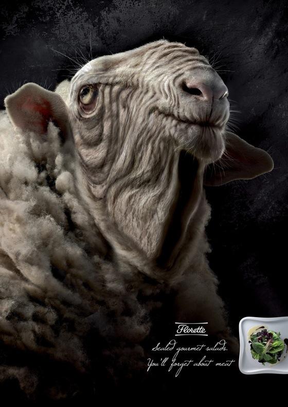 florette_sheep.jpg