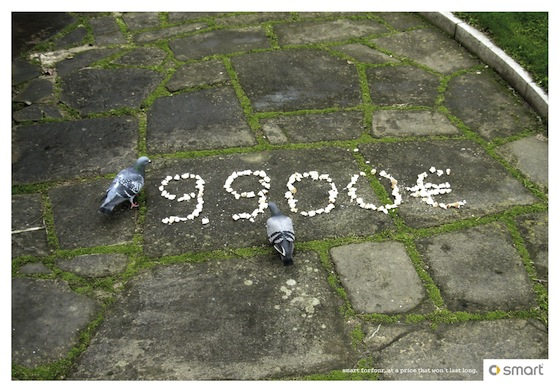 Smart  -pigeon