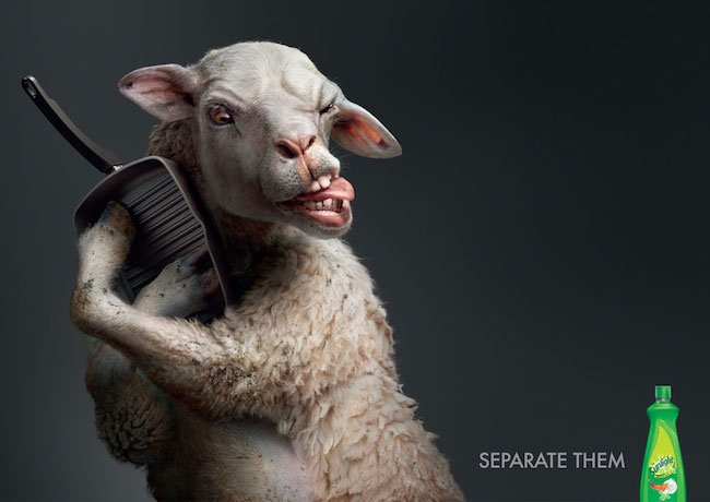 sunlight-sheep