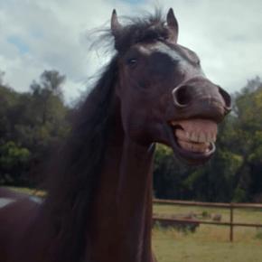 Volkswagen laughing horses