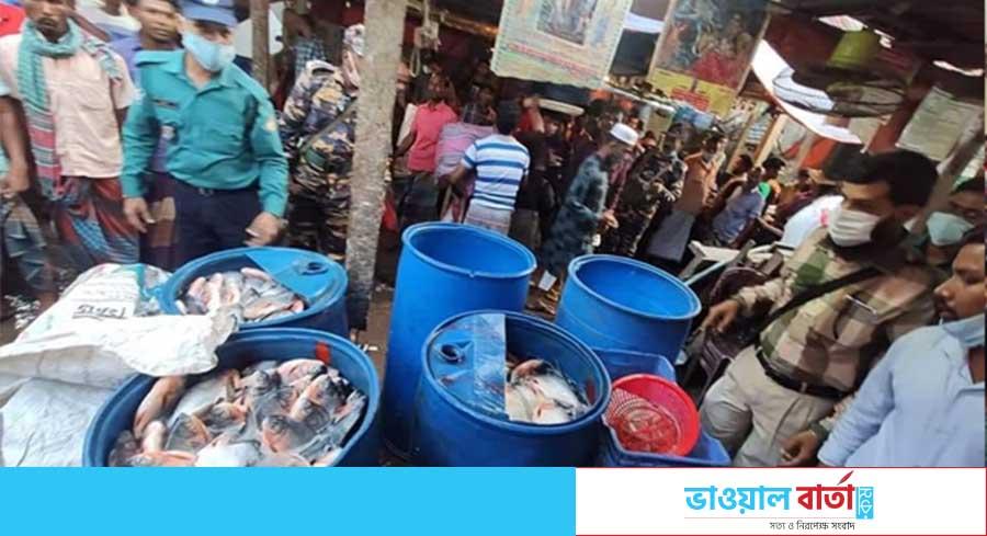 গাজীপুর সদর উপজেলায় ১০ মন বিষাক্ত মাছ জব্দ