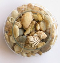 Some of my collection of Rocks and shells