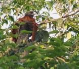 Hiding in the foliage
