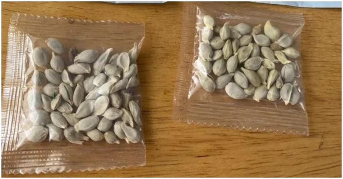 Recebimento de sementes misteriosas, supostamente da China, deixa norte-americanos em alerta