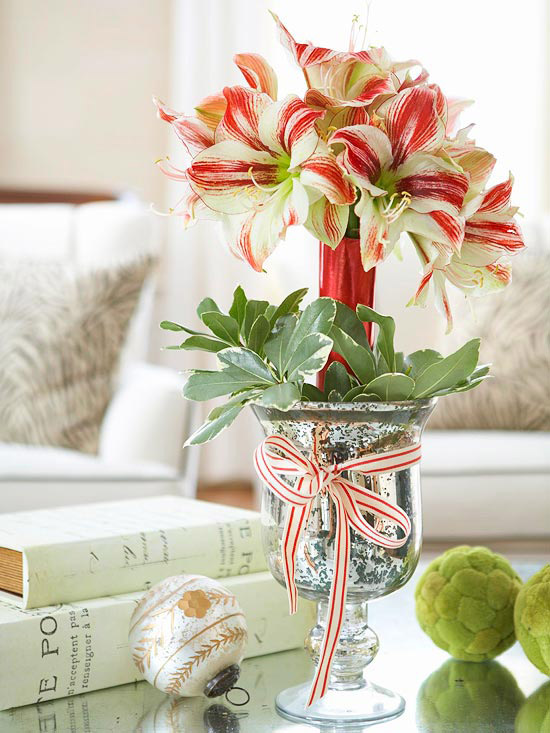 Amaryllis Care And Decorating Ideas For Christmas Better