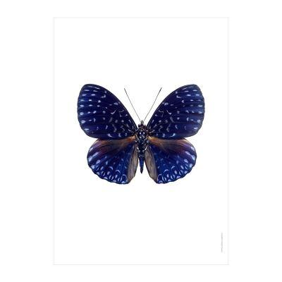 butterfly-print-hamadryas-velutina