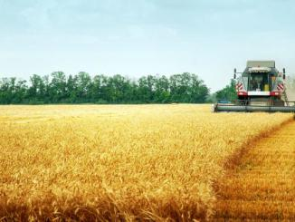 Zimbabwe Plans To Import Wheat From Canada