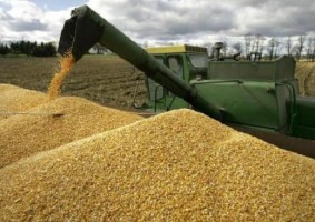 Cabinet Approves to Increase Wheat Price