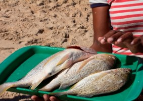President Urges Environment Minister to Double Effort On Fisheries