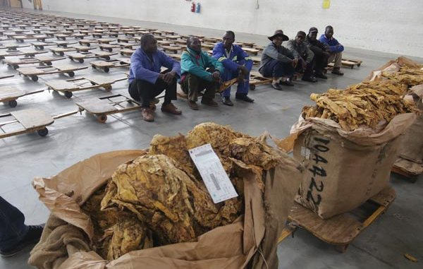 Tobacco Sales To Go Down This Year