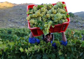 Agricultural Industry To Continue Operating in Zimbabwe's Lockdown