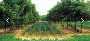 কৃষি বনসৃজন (Agroforestry)