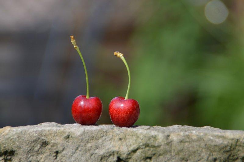 cherry-829540_1280