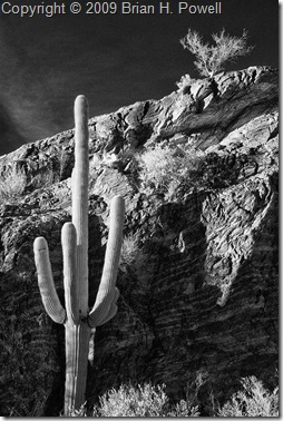 saguaro_national_park_javelina_rocks
