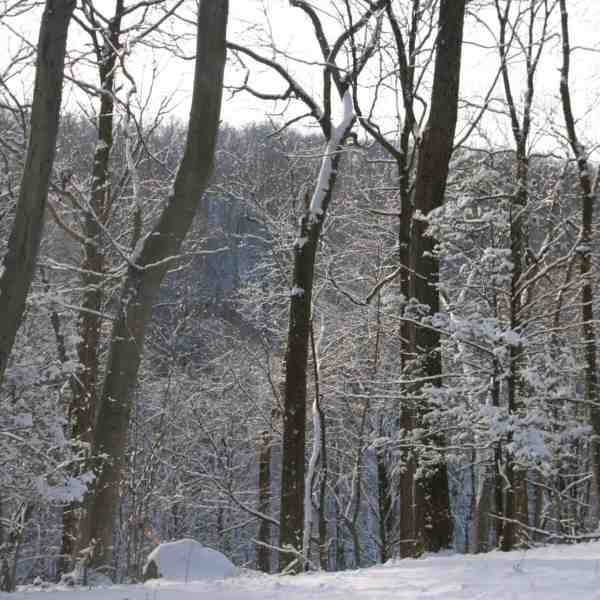 Curation Walk: Penns Woods