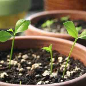 Growing Native Plants: Seed Propagation