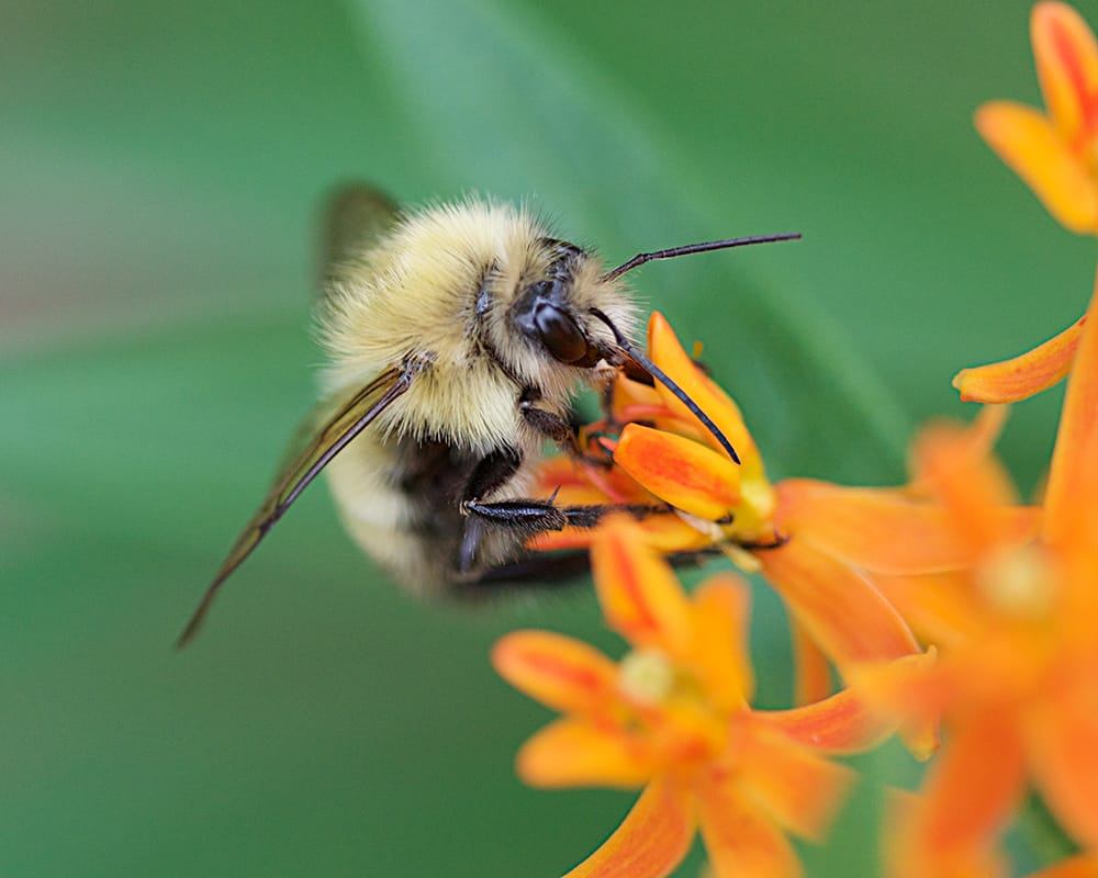 Pollinators and Pollination Strategies