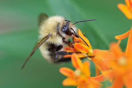 Pollinators and Pollination Strategies