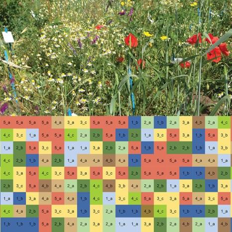 Görsel: Lenora Ditzler (Wageningen University Research), OMA'nın izni ile
