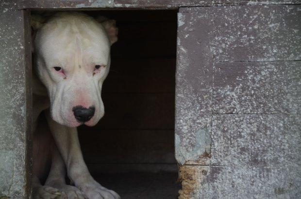 Pies, który zamknięty w mieszkaniu w centrum Pabianic przez trzy miesiące żywił się zwłokami właścicielki. Drzwi wyważono dopiero gdy mieszkającą poniżej rodzinę zaczęła zalewać woda