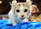 Poproś swojego kota, by zatańczył i nagraj film. Ratuj tygrysy razem z WWF