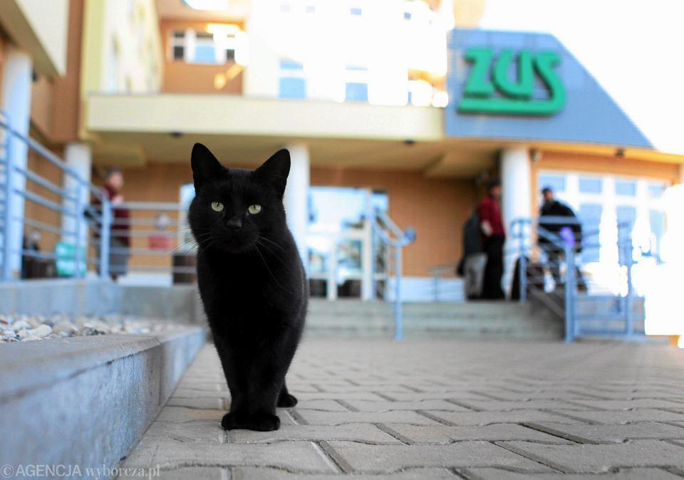 Pracownicy ZUS, bojąc się, że po obniżeniu wieku emerytalnego będą musieli zmagać się z lawinowym napływem wniosków o świadczenia, wykupują polisy od odpowiedzialności urzędniczej. Nz. czarny kot przed siedzibą ZUS w Szczecinie