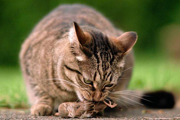 Kot ze zdobyczą