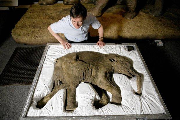 To mamuciątko zginęło 42 tys. lat temu w na Półwyspie Jamalskim