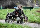 Poruszająca historia sparaliżowanego psa, który dzięki swej pani na dwóch łapach biega w wyścigach [WIDEO]