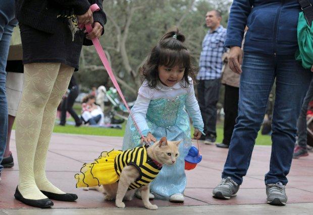 Halloween jest głównie świętem dzieci - to one zbierają słodycze, często w towarzystwie swoich opiekunów i podopiecznych.