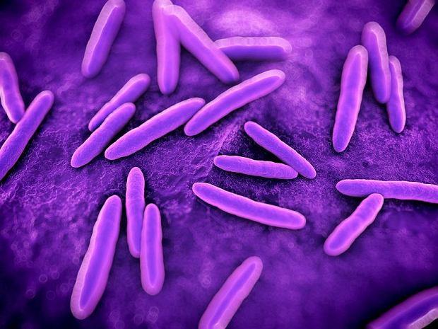 Wystarczy, że jedna z bakterii uzyska nową umiejętność, a szybko przekazuje ją w prezencie innym mikrobom.