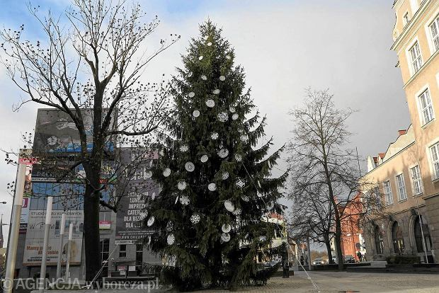 Olsztyn City Hall Christmas tree