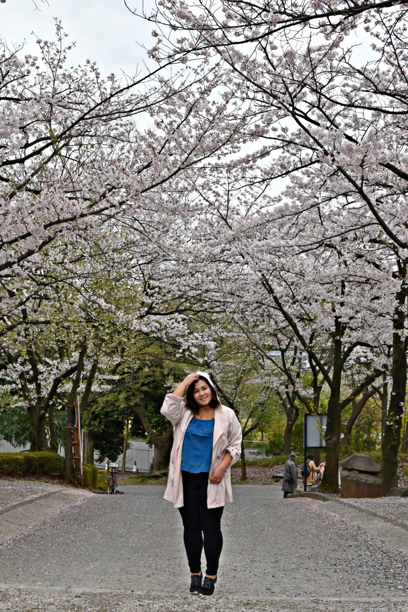 Travel to Japan for Cherry Blossom season