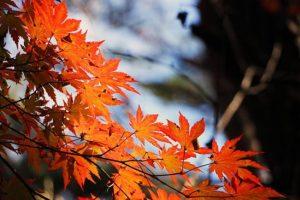 紅葉の画像