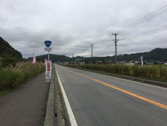 長野佐久コスモス街道のコスモスまつり会場画像