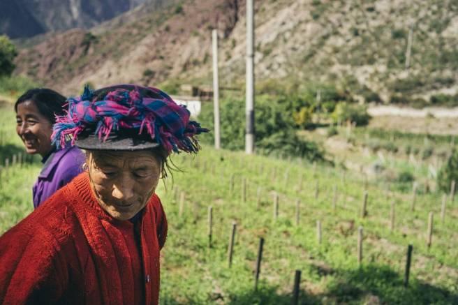 ao-yun-vino-contadini-himalaya