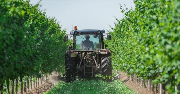 Un trattore in vigna per viticoltura biologica