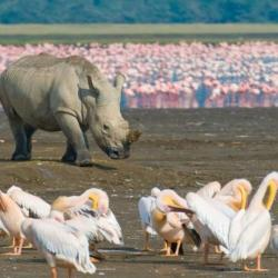 7 days samburu lake nakuru & masai mara safari