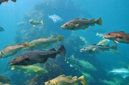 Fish in the Baltic Sea