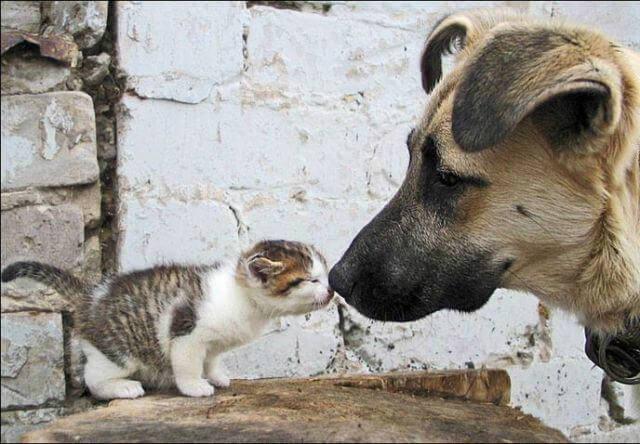 子猫の鼻と、優しいわんちゃんの鼻がチュッってしている