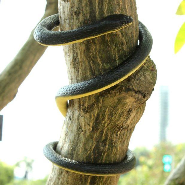 Humorous Snake Rubber