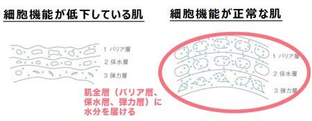 肌全層の分解図