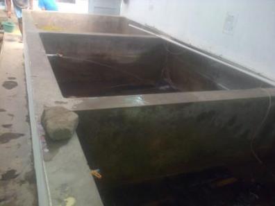 kolam pemijahan lele