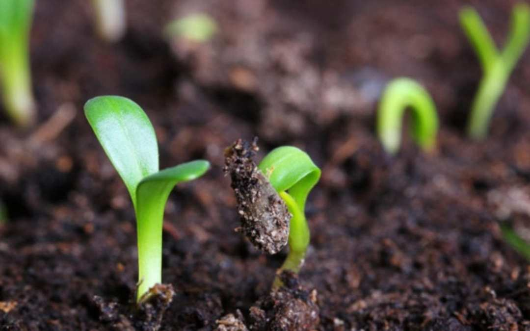 Jesus is like topsoil [4 thoughts about our relationship with Christ]