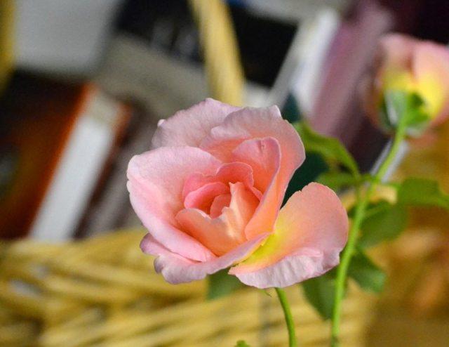 fragrant offering