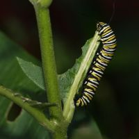 8. Butterfly vs. Caterpillar