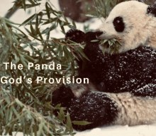 The Panda and God's Provision